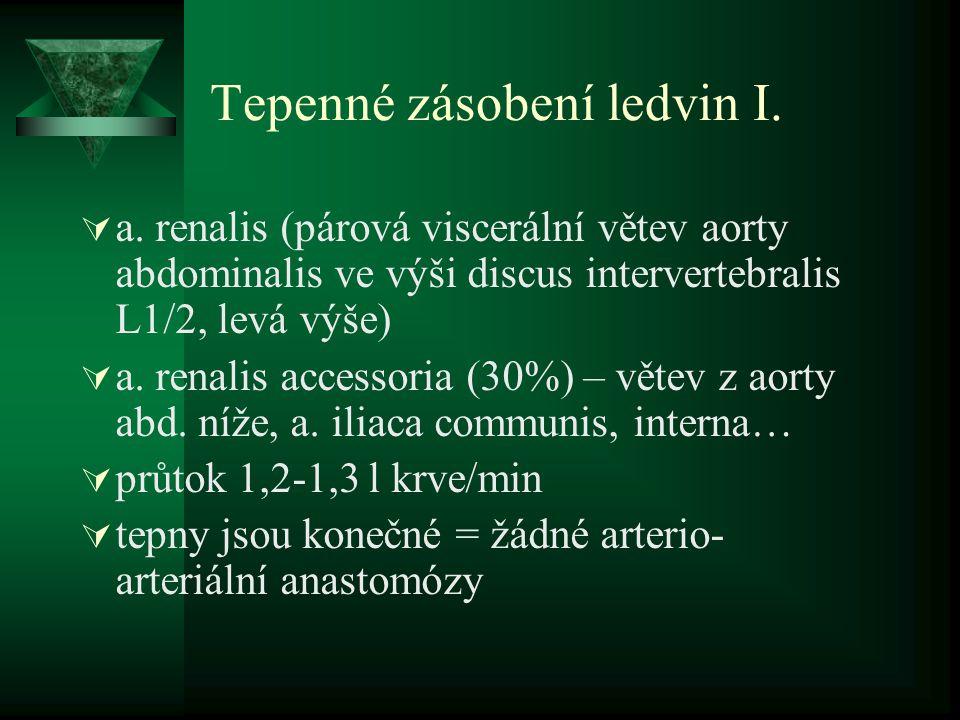 Tepenné zásobení ledvin I.