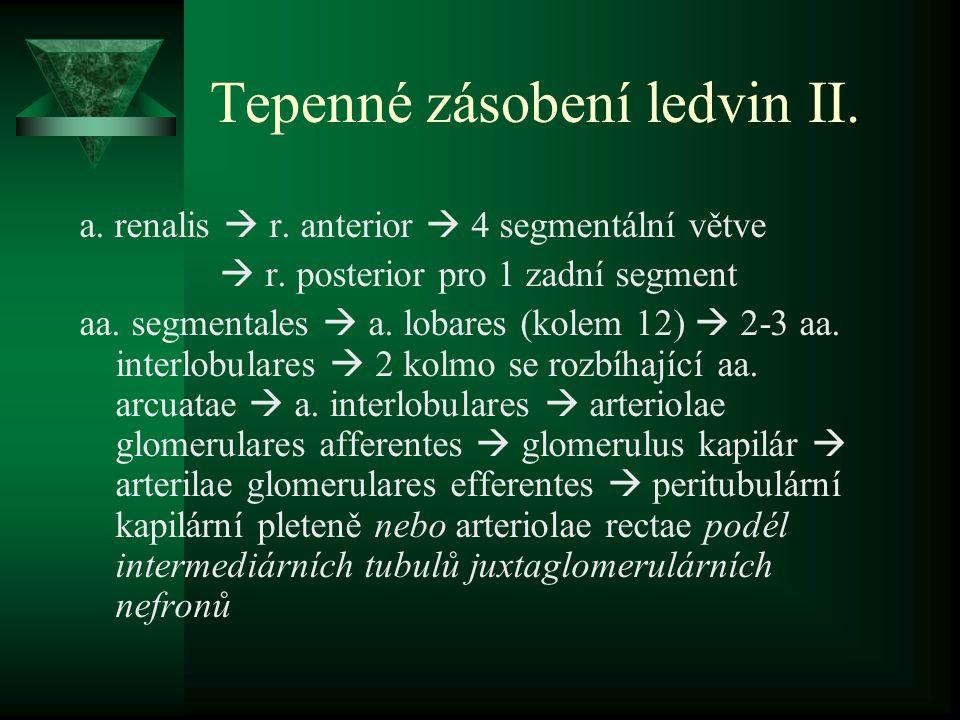 Tepenné zásobení ledvin II.