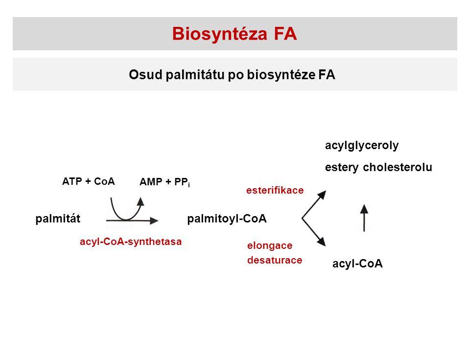 Biosyntéza FA Osud palmitátu po biosyntéze FA acylglyceroly