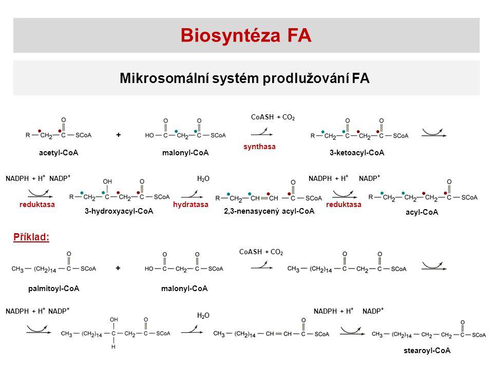 Biosyntéza FA Mikrosomální systém prodlužování FA Příklad: + +