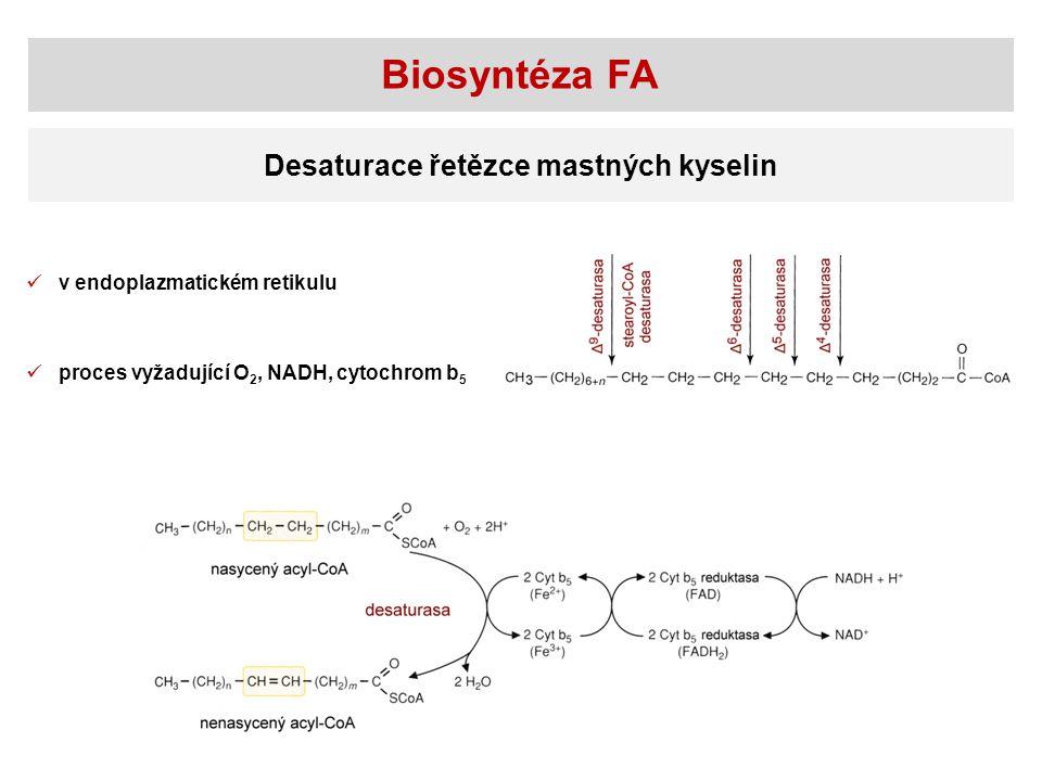 Biosyntéza FA Desaturace řetězce mastných kyselin