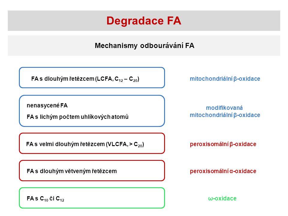 Degradace FA Mechanismy odbourávání FA
