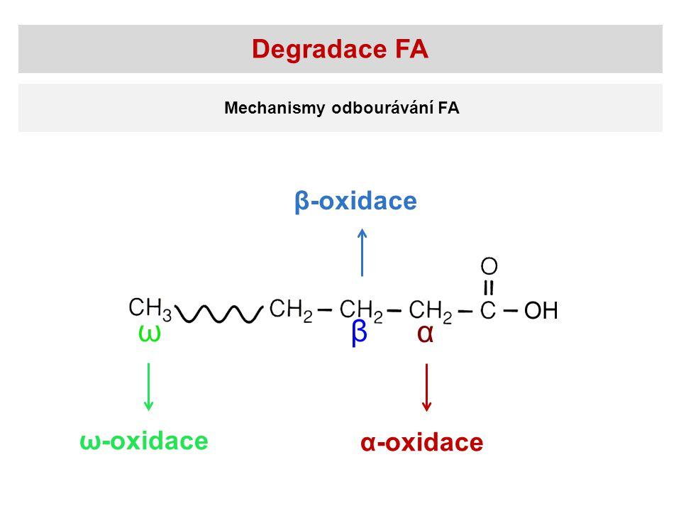 Degradace FA Mechanismy odbourávání FA β-oxidace ω-oxidace α-oxidace