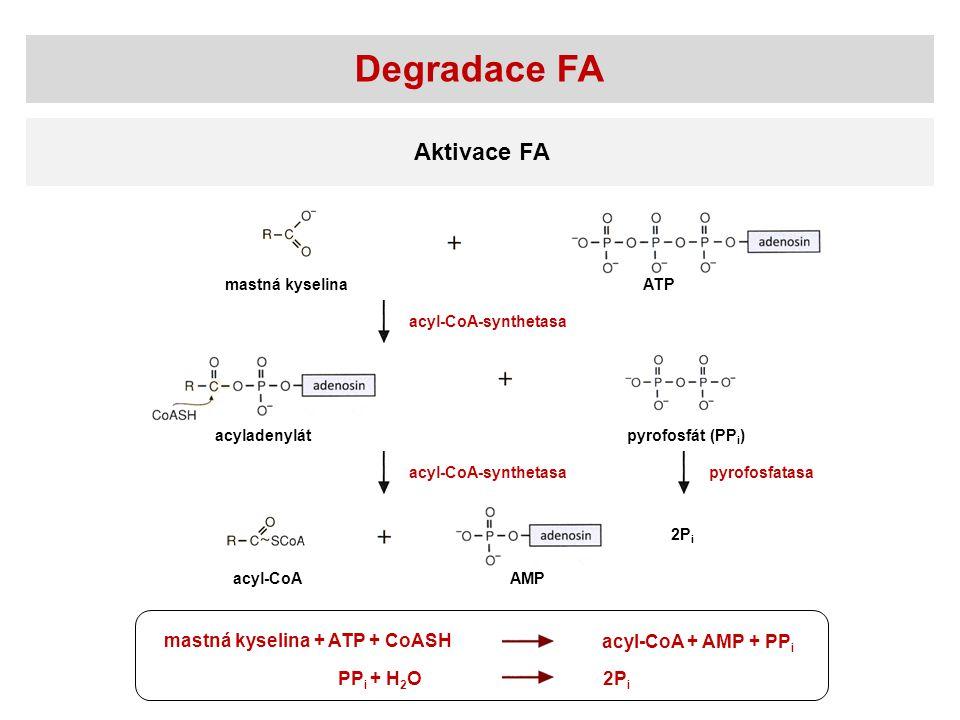 Degradace FA Aktivace FA mastná kyselina + ATP + CoASH