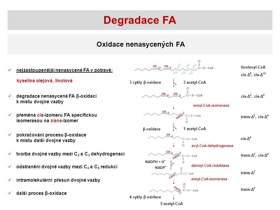 Degradace FA Oxidace nenasycených FA
