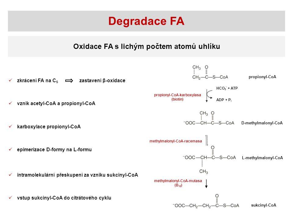 Degradace FA Oxidace FA s lichým počtem atomů uhlíku zkrácení FA na C5