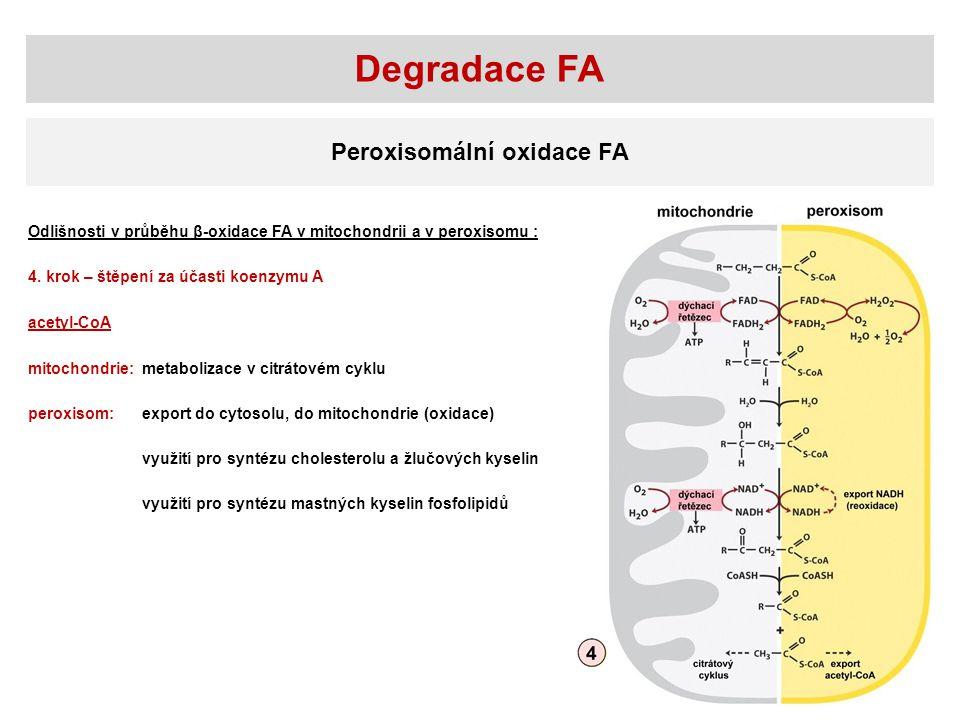 Degradace FA Peroxisomální oxidace FA