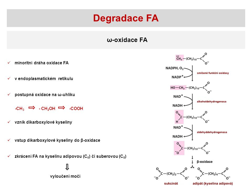 Degradace FA ω-oxidace FA minoritní dráha oxidace FA