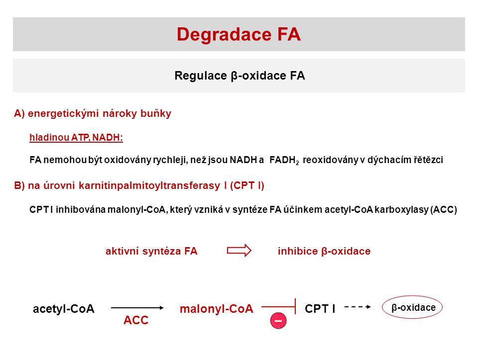 Degradace FA Regulace β-oxidace FA acetyl-CoA malonyl-CoA CPT I ACC