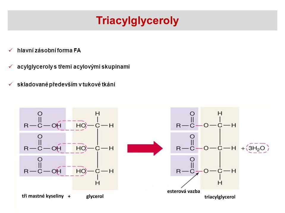 Triacylglyceroly hlavní zásobní forma FA
