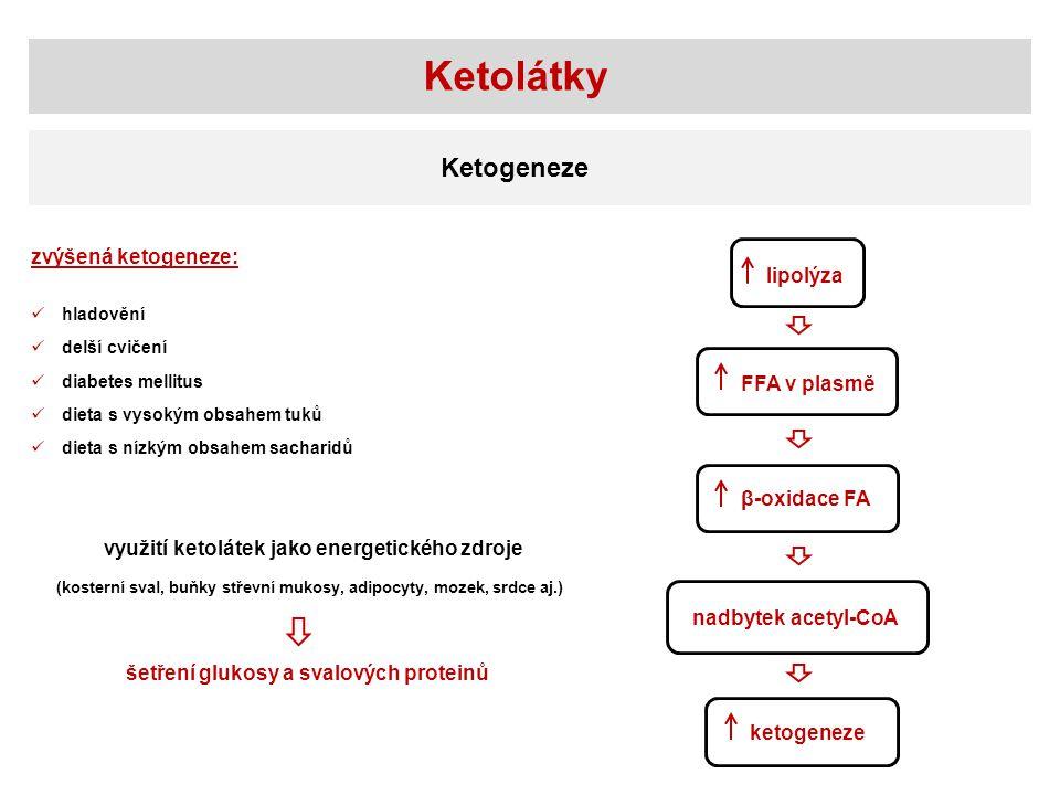Ketolátky Ketogeneze zvýšená ketogeneze: lipolýza FFA v plasmě