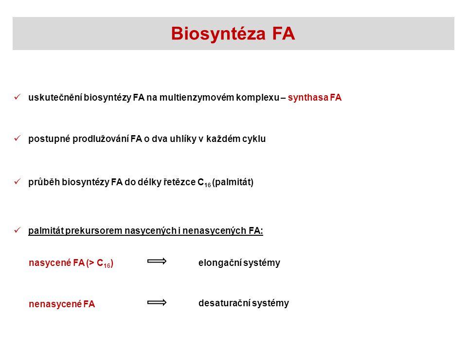 Biosyntéza FA uskutečnění biosyntézy FA na multienzymovém komplexu – synthasa FA. postupné prodlužování FA o dva uhlíky v každém cyklu.