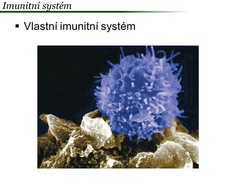 Vlastní imunitní systém