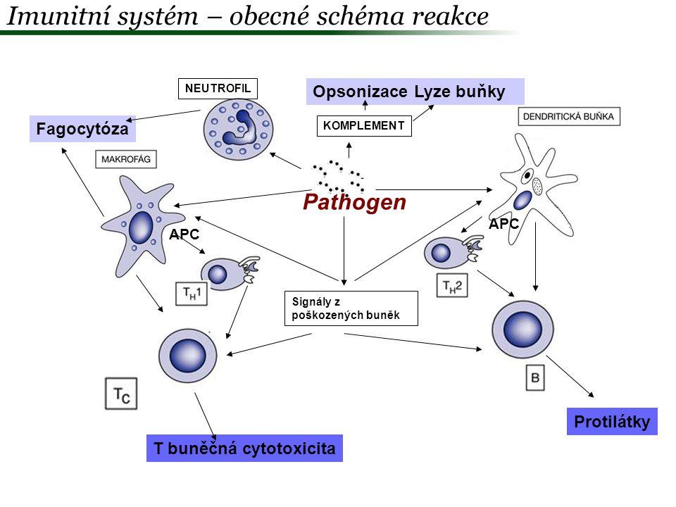 Imunitní systém – obecné schéma reakce