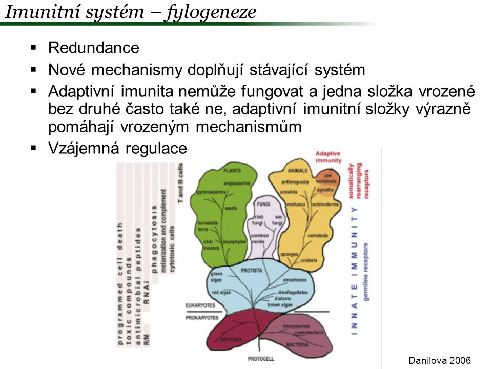 Imunitní systém – fylogeneze