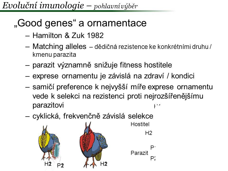 """""""Good genes a ornamentace"""