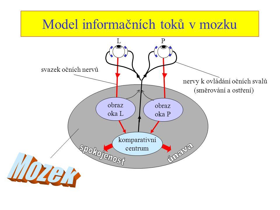 Model informačních toků v mozku