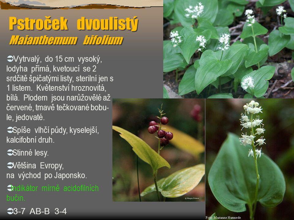 Pstroček dvoulistý Maianthemum bifolium