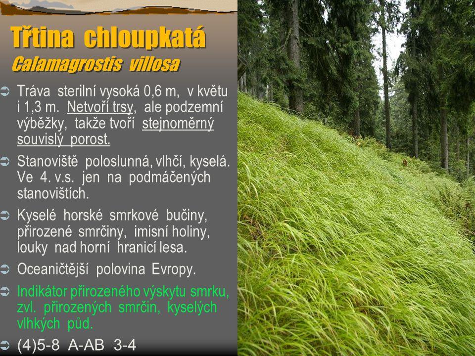 Třtina chloupkatá Calamagrostis villosa