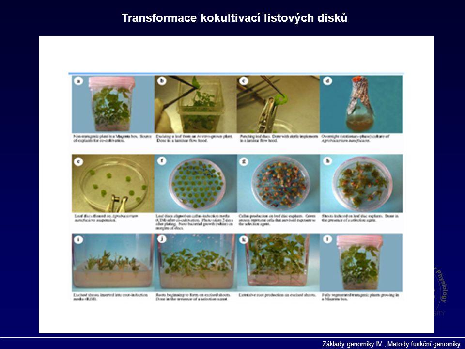 Transformace kokultivací listových disků