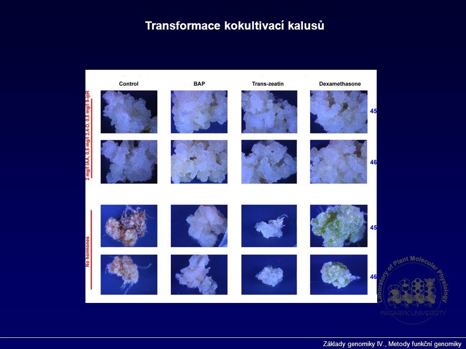 Transformace kokultivací kalusů