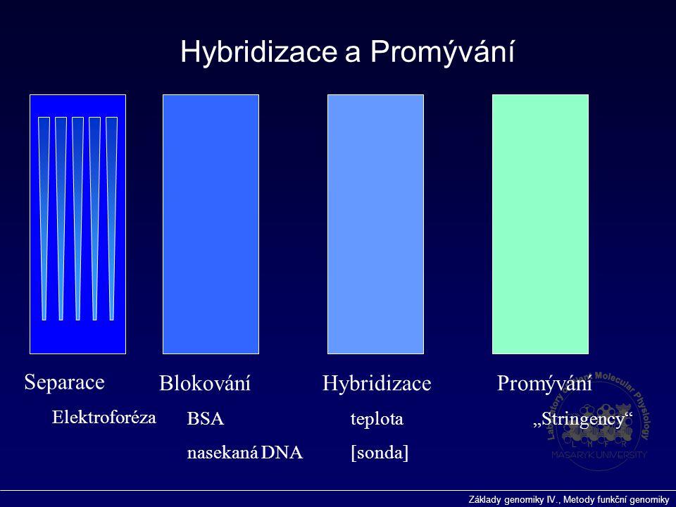 Hybridizace a Promývání
