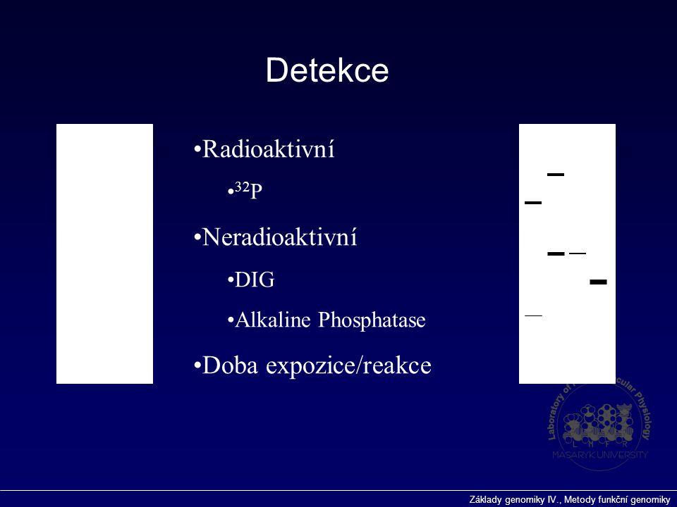 Detekce Radioaktivní Neradioaktivní Doba expozice/reakce 32P DIG