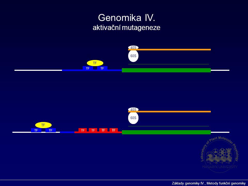 Genomika IV. aktivační mutageneze 40S 60S TF 40S 40S 40S 40S 60S 60S