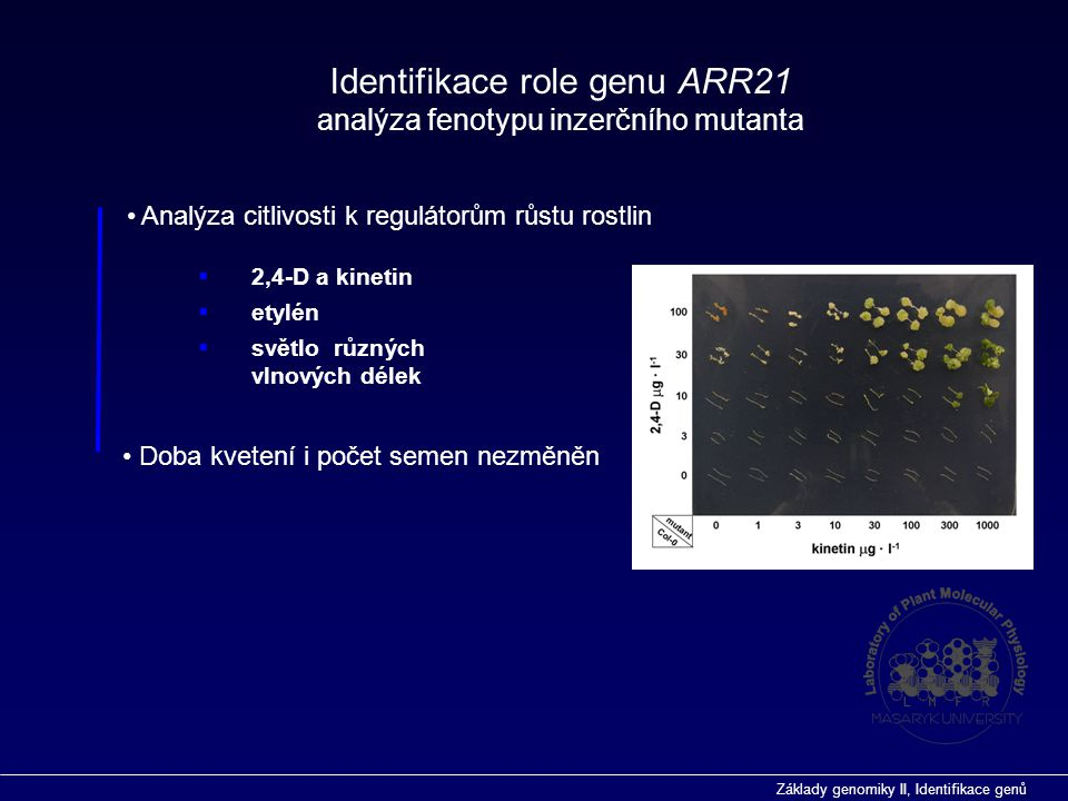 Identifikace role genu ARR21 analýza fenotypu inzerčního mutanta