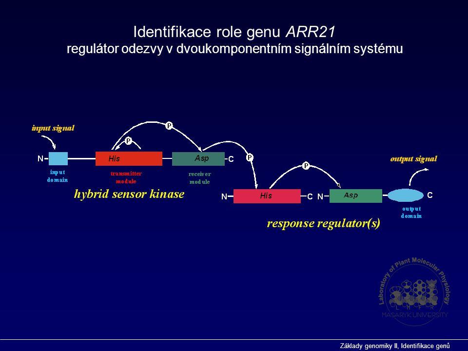 Identifikace role genu ARR21