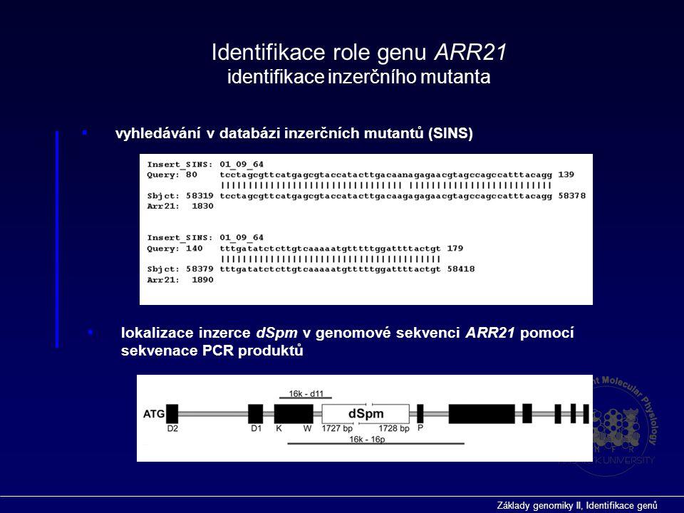 Identifikace role genu ARR21 identifikace inzerčního mutanta
