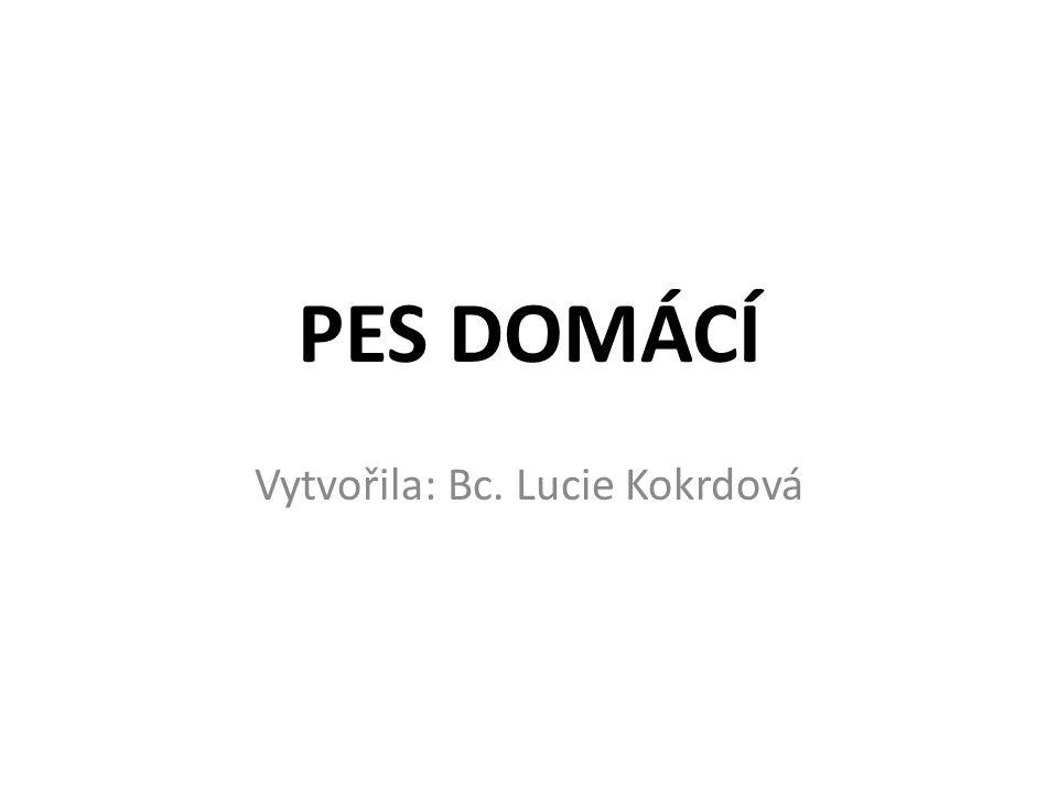 Vytvořila: Bc. Lucie Kokrdová