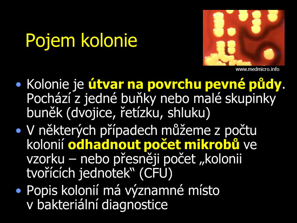 Pojem kolonie www.medmicro.info. Kolonie je útvar na povrchu pevné půdy. Pochází z jedné buňky nebo malé skupinky buněk (dvojice, řetízku, shluku)