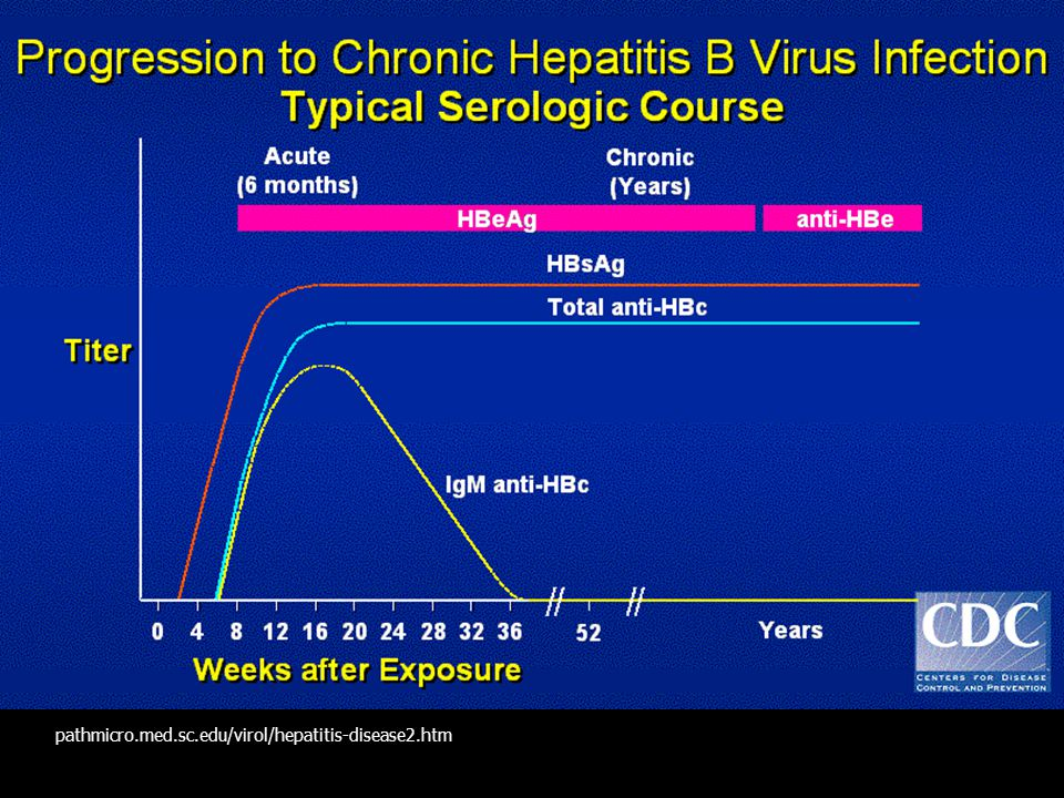 pathmicro.med.sc.edu/virol/hepatitis-disease2.htm