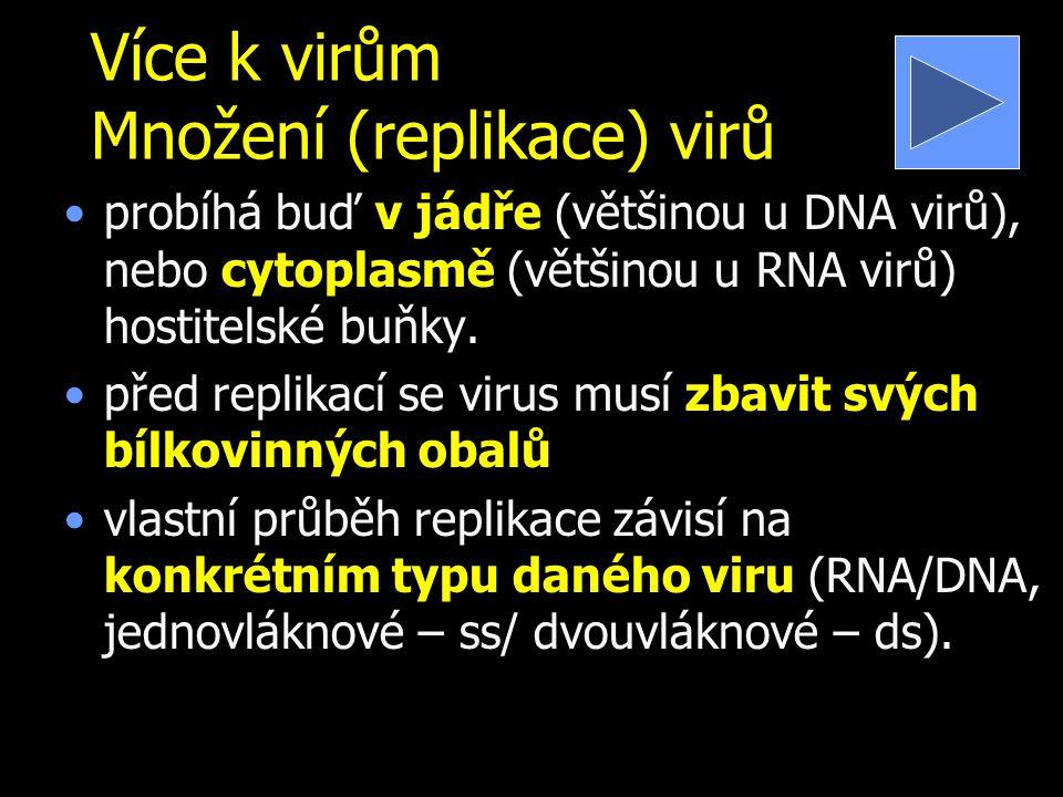 Více k virům Množení (replikace) virů