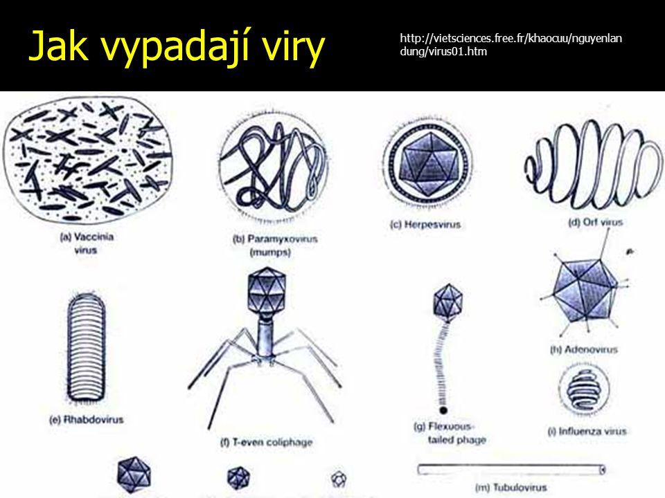Jak vypadají viry http://vietsciences.free.fr/khaocuu/nguyenlandung/virus01.htm