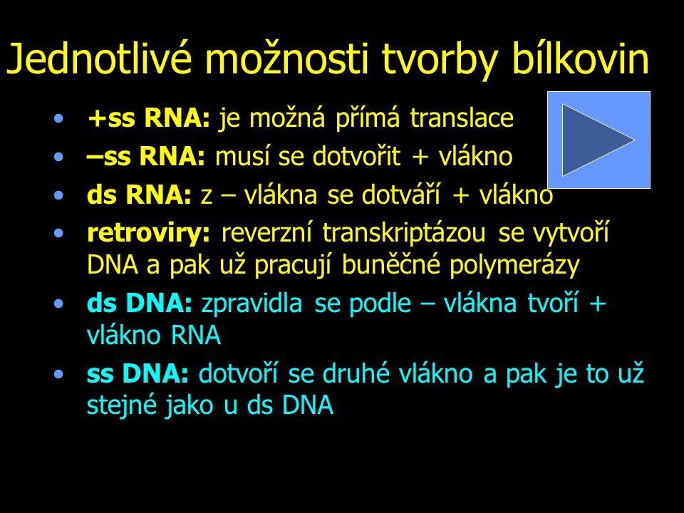 Jednotlivé možnosti tvorby bílkovin