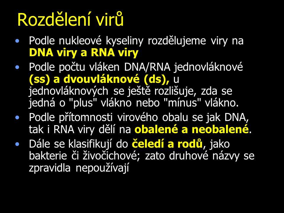 Rozdělení virů Podle nukleové kyseliny rozdělujeme viry na DNA viry a RNA viry.