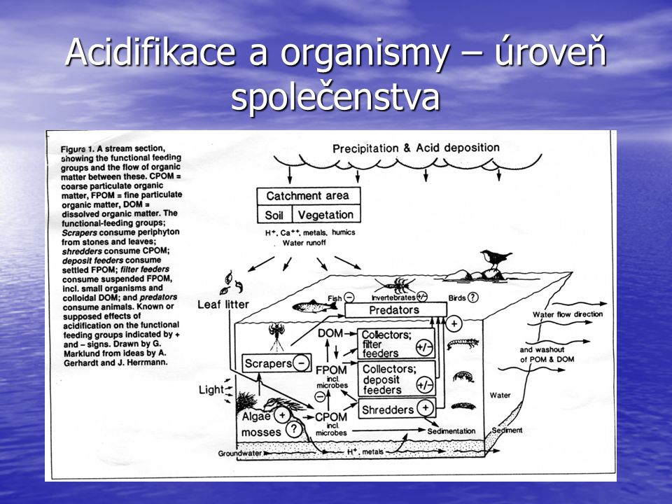Acidifikace a organismy – úroveň společenstva