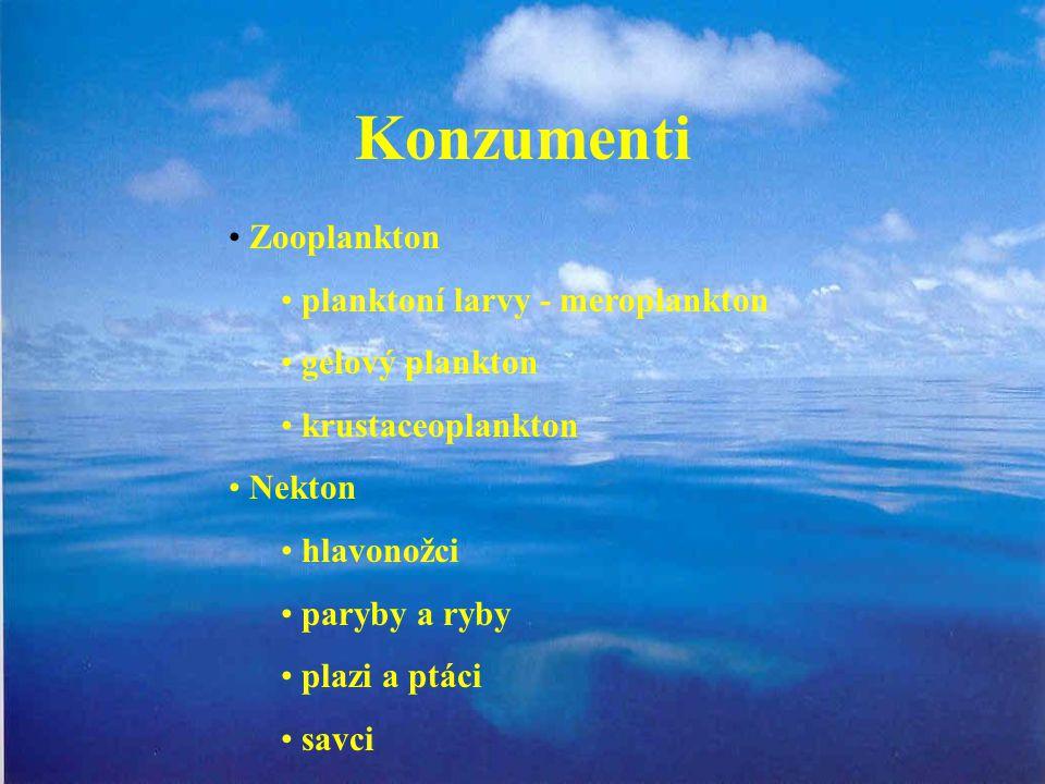 Konzumenti Zooplankton planktoní larvy - meroplankton gelový plankton