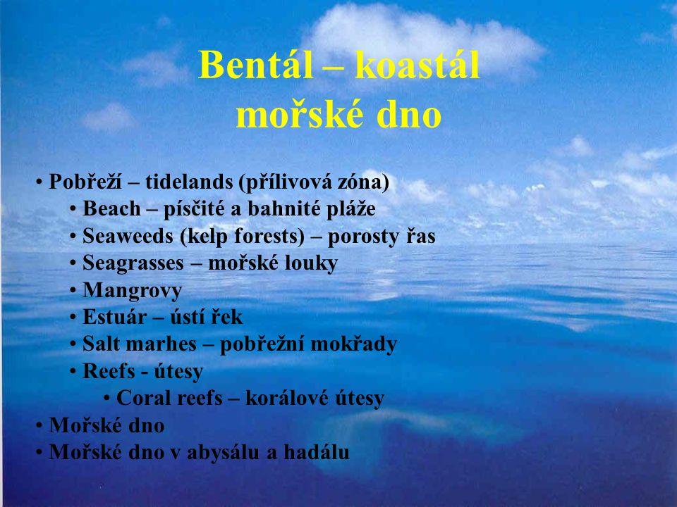 Bentál – koastál mořské dno