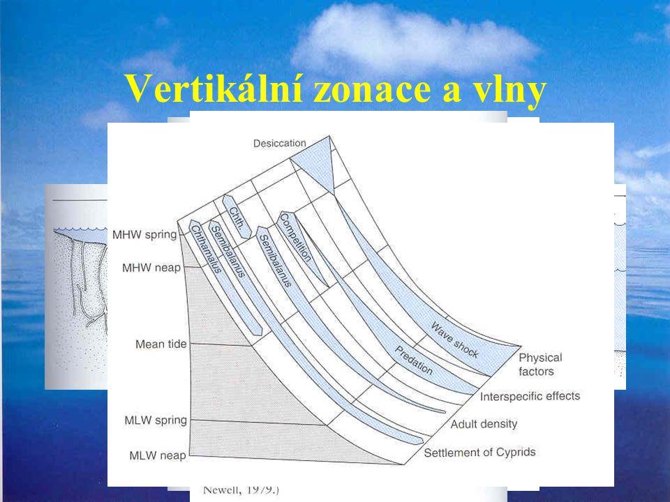 Vertikální zonace a vlny