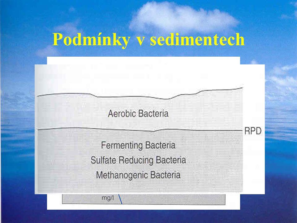Podmínky v sedimentech
