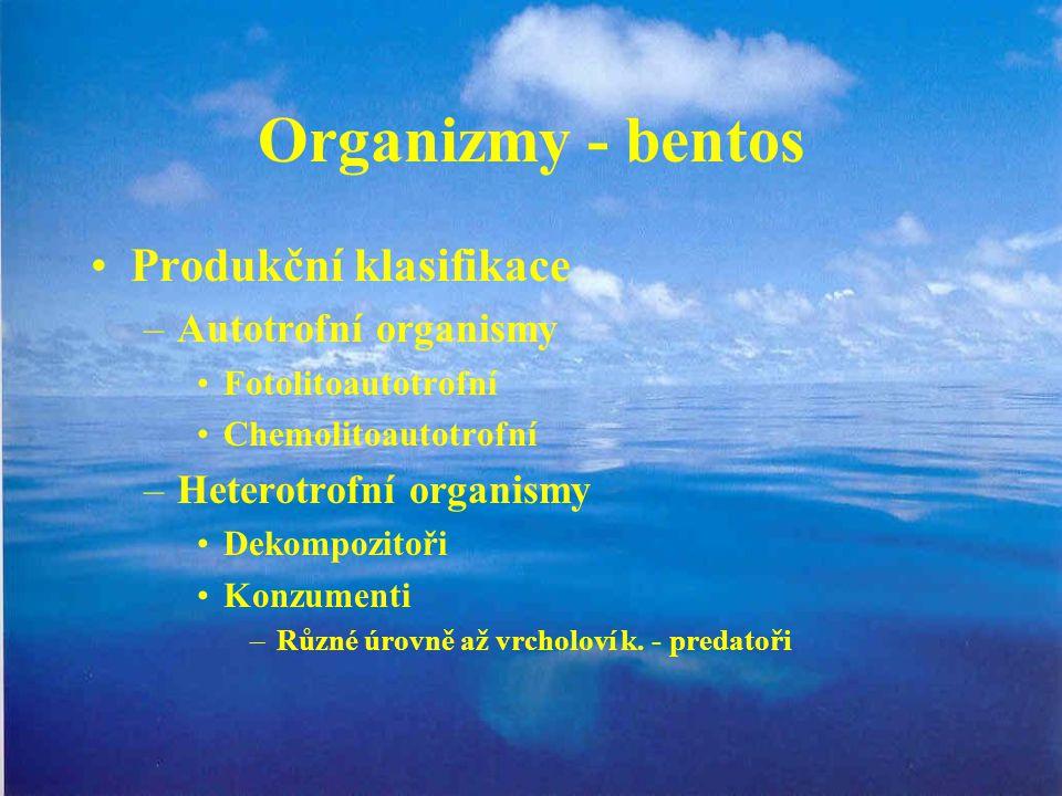 Organizmy - bentos Produkční klasifikace Autotrofní organismy