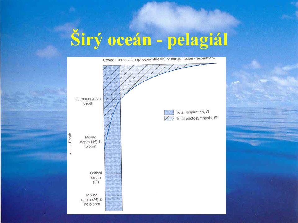 Širý oceán - pelagiál