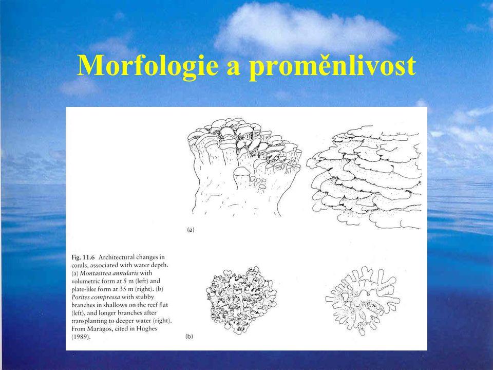 Morfologie a proměnlivost