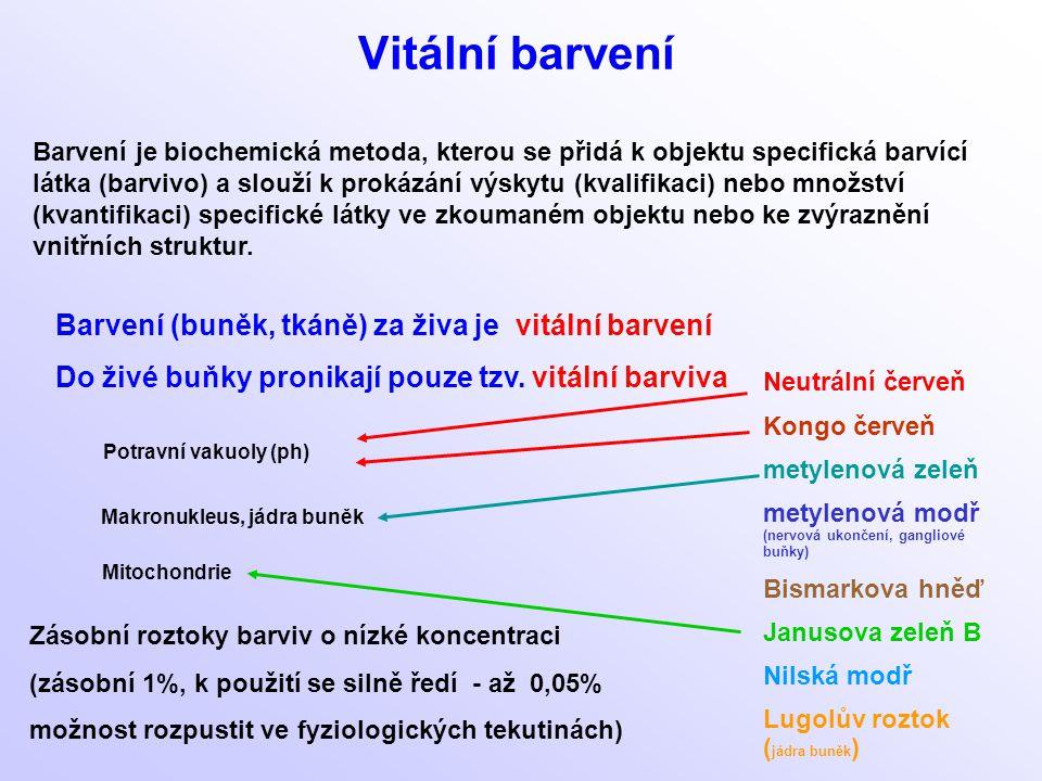 Vitální barvení Barvení (buněk, tkáně) za živa je vitální barvení
