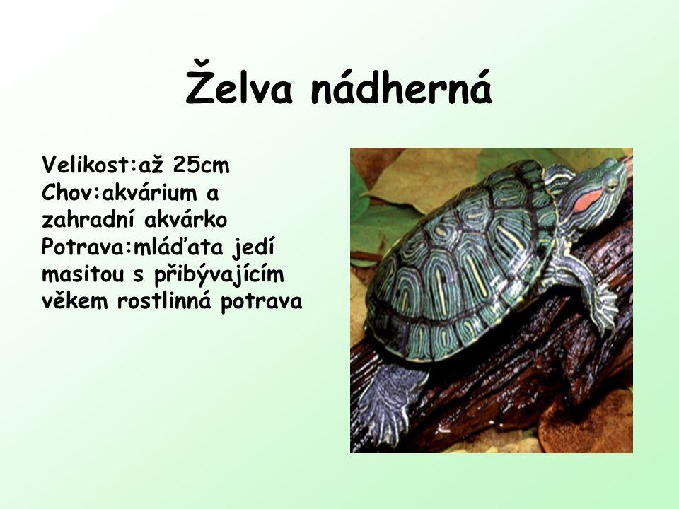 Želva nádherná Velikost:až 25cm Chov:akvárium a zahradní akvárko