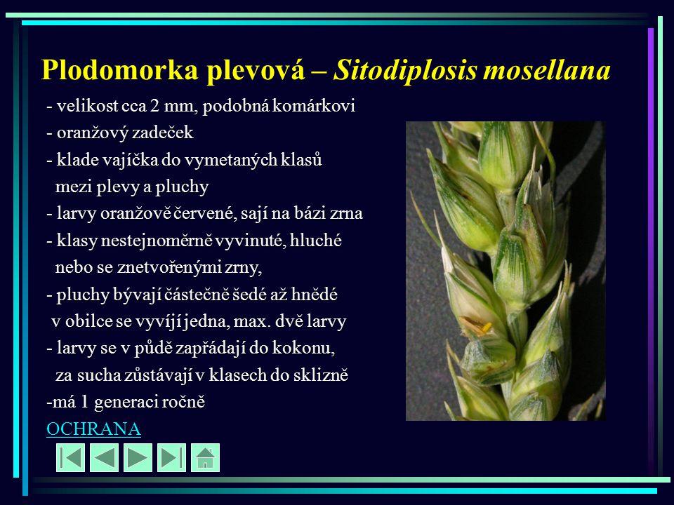 Plodomorka plevová – Sitodiplosis mosellana