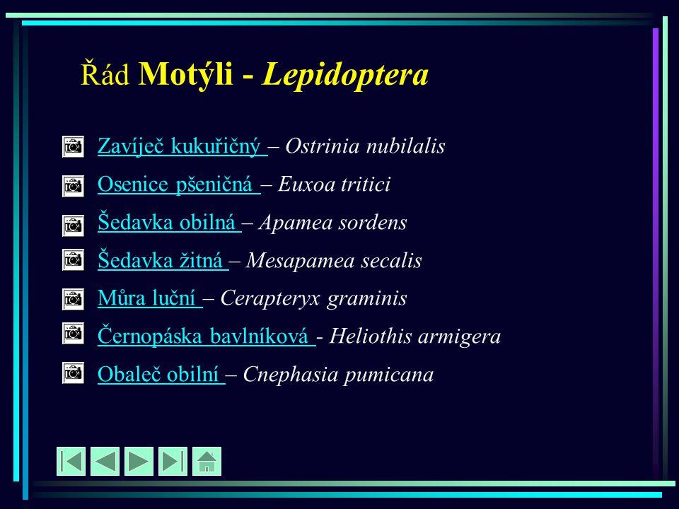 Řád Motýli - Lepidoptera
